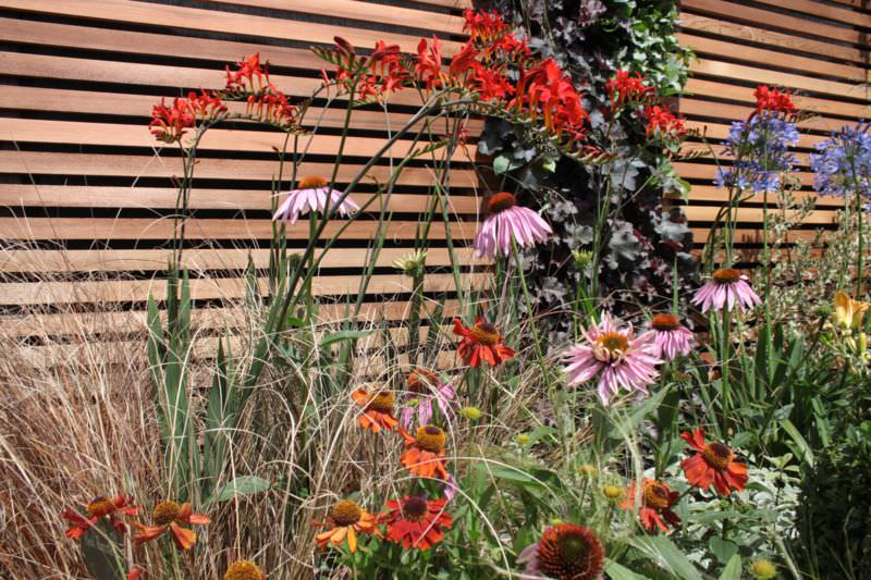 Garden-design-planting-soft-landscaping